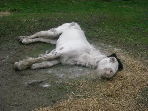 The latest horse put to sleep on Fens Pool Nature Reserve