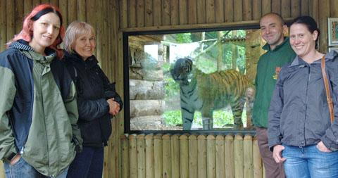 Catching up with tiger Daseep, are Wuppertal Zoo visitors Nadine Hess, Barbara Scheer and Janis Dormagen and Dudley Zoo's assistant curator, Richard Brown. Buy photo: 251246LA.