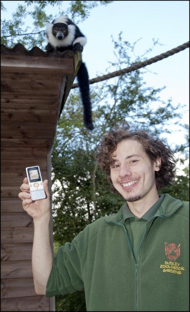 Dudley Zoo trainee keeper Shaun Crompton retrieves his mobile phone from mischievous black and white ruffed lemur, Splitz.