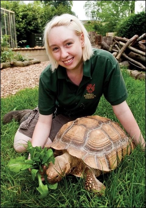 Senior keeper, Laura Robbins, with African spurred tortoise, Ernie