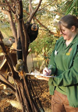Trainee keeper Cerys Grove counts small primates during the annual zoo census which records every animal and species on the 40-acre site.