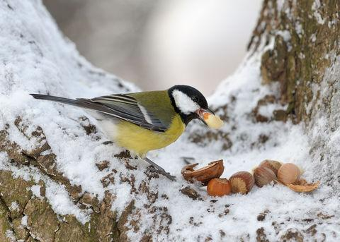 Dudley News: Seeds of survival for birds