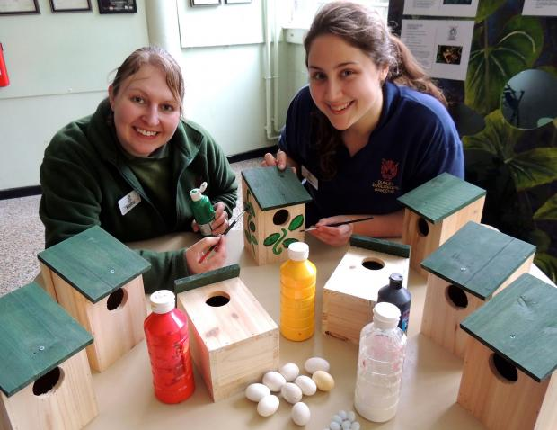Dudley News: DZG birds section leader, Kellie Piper, and presenter, Pam Midwood, get to work decorating a bird box.