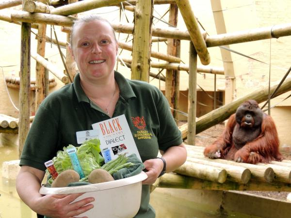 Bornean orangutan Jorong gets ready for a Black Country supper served by Upper Primates Section Leader, Pat Stevens