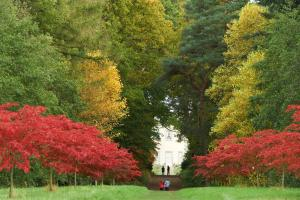 Be inspired by autumn walks