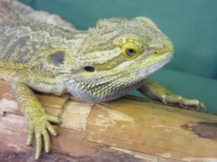 Sedgley based Proteus Reptile Trust looking for loving homes for its