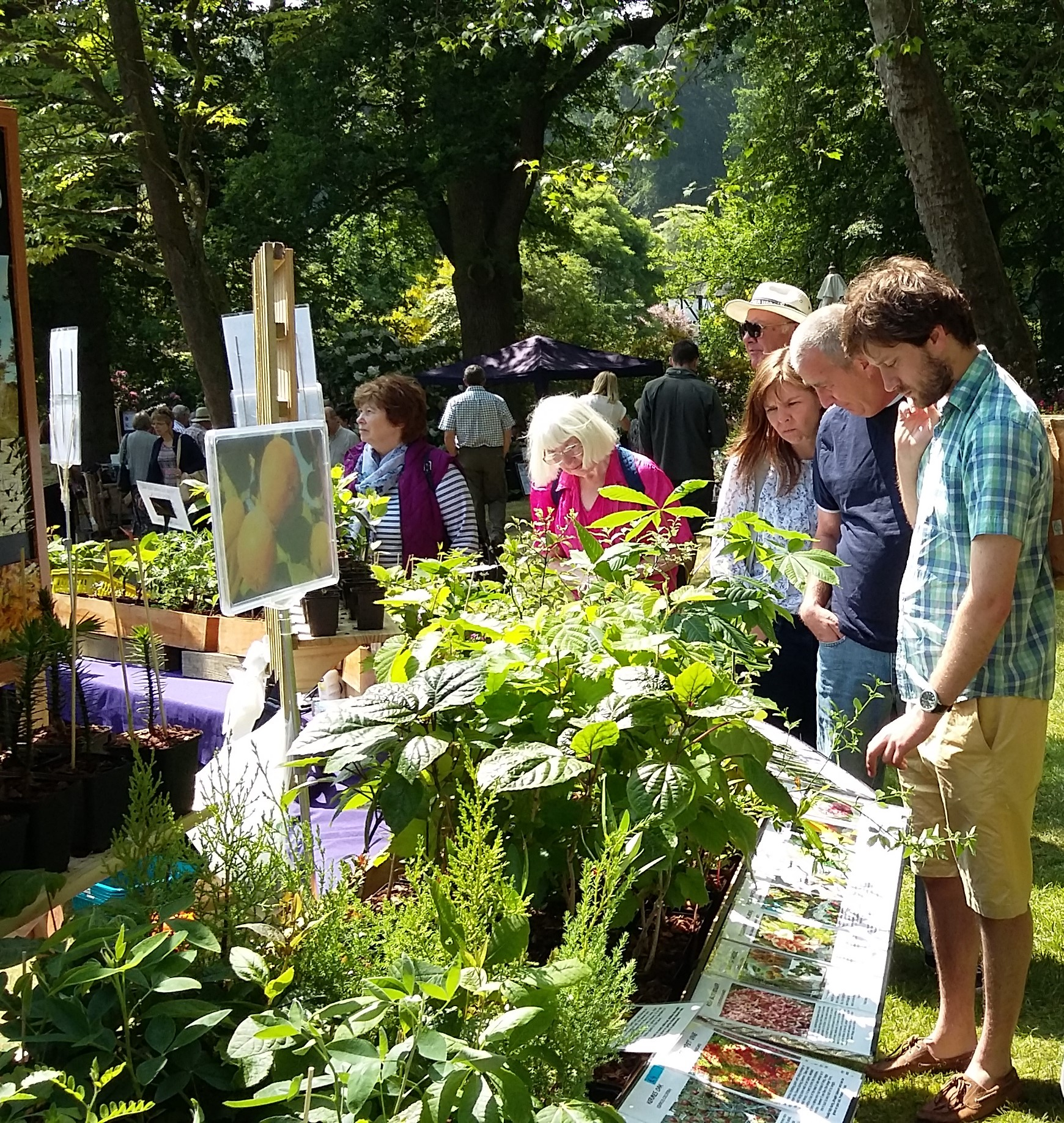 Plant Hunters' Fair at Arley Arboretum, Worcestershire on Saturday 19th May 2018