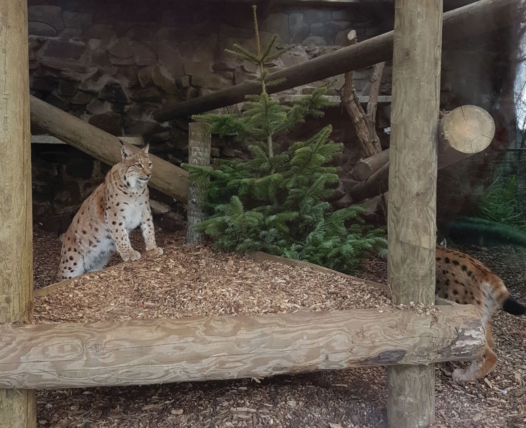 Animals at Dudley Zoo are having tree-mendous fun