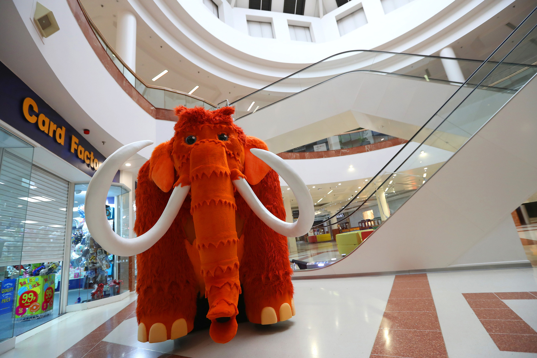 intu Merry Hill's new mascot Marmalade the Mammoth has arrived at the centre in time for May half term. Photo: Adam Fradgley